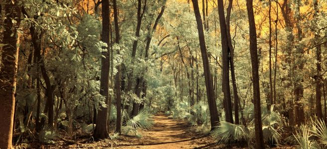forest, path, nature trail